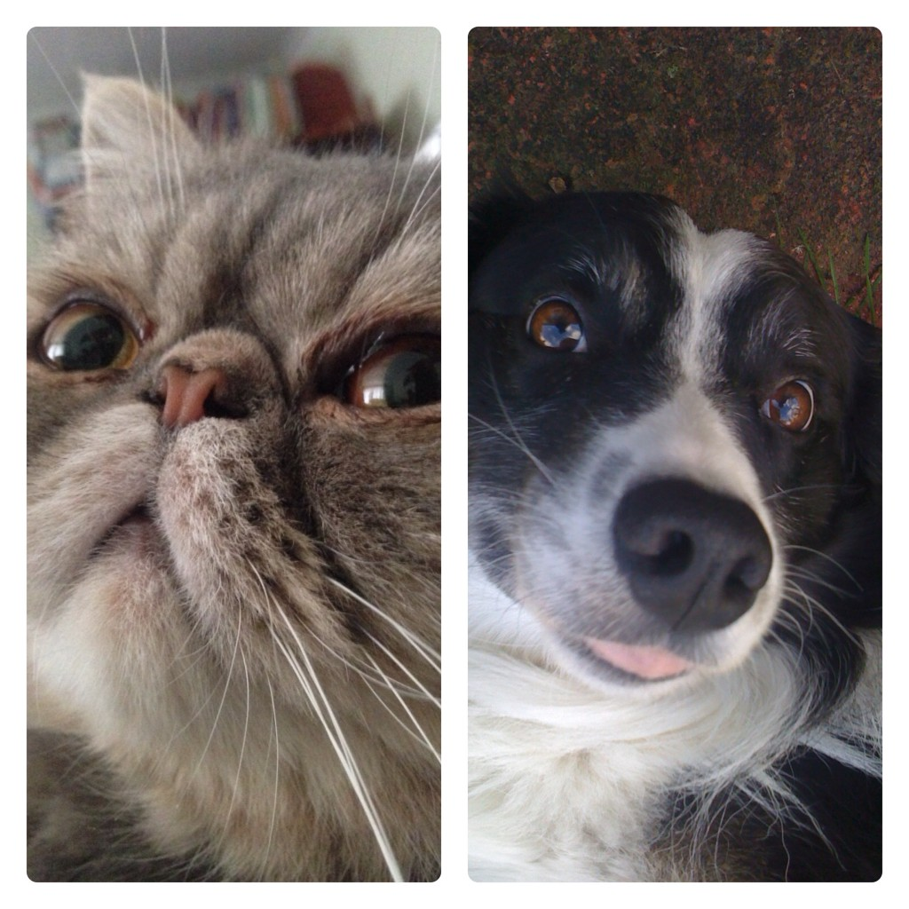 The future stars of Cat Selfies and Dog Selfies