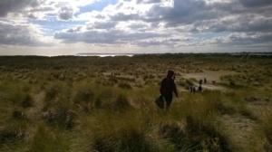 summersdale-beach-clean-dunes