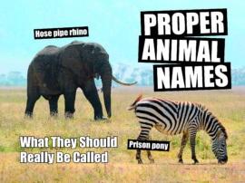 Proper Animal Names