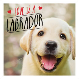 Love is a Labrador
